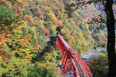 Going to the hidden scenic spot of the Kurobe Gorge to see the beautiful autumnal leaves. | JAPAN Monthly Web Magazine