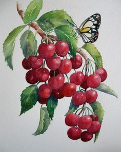 Very Cherry  (Watercolour) Helen Miles
