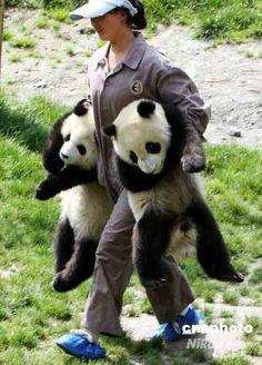 パンダ!Panda
