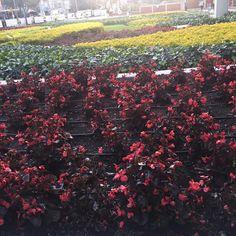 Jardines en Rojo Centro Comercial Santa Fe, Bogota