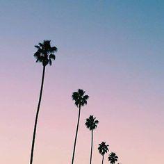 << Bring me back to Cali >>