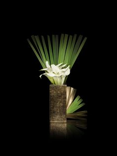 Image result for armani flowers