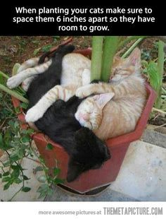♥ Cat Care Tips ♥ Plant care tips…