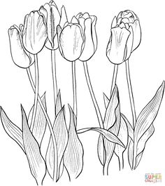 Seven Tulips coloring page | SuperColoring.com