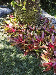 Bromeliads | Flickr – Compartilhamento de fotos!