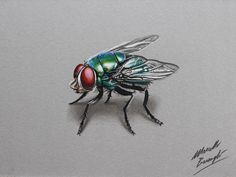 Watch on YouTube how I draw this green bottle fly http://youtu.be/_haGWlTZDnQ