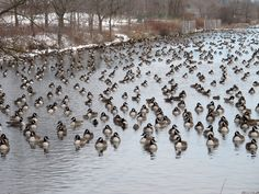 Canada Goose toronto sale official - 1000+ images about Canada Eh? on Pinterest | Ontario, Canada and ...