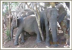 Murera and Mwashoti cool off under the shade