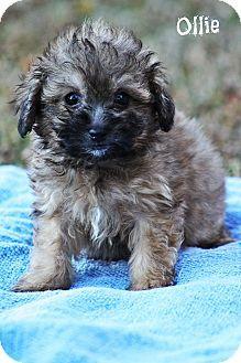 East Hanover Nj Bichon Frise Meet Bijou A Dog For Adoption Http Www Adoptapet Com Pet