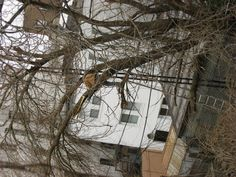 Old tree stands no chance against woodcutters in Greenwood Heights http://brooklynian.com/forum/greenwood-heights-and-sunset-park/old-tree-stands-no-chance-to-chopping