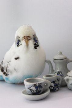 Tea keet