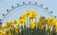 Signs of Spring {photos Spring Wallpaper, Flower Wallpaper, Iphone Background Images, Dating In London, Desktop Images, On The Bright Side, Spring Photos, Spring Sign, London City