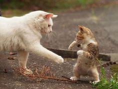 #cat #kitty