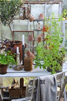 Potting Bench and Antiques for the Garden Greenhouse Shed, Greenhouse Gardening, Indoor Gardening Supplies, Potting Sheds, Potting Benches, Vibeke Design, Porches, Garden Styles, Dream Garden