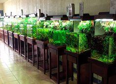13 sizes available for the Aquaplantarium