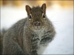 Curious Squirrel by Denise Irving