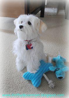 Thrifty Decor Mom: Spoiled Rotten Dog