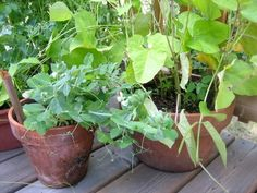 Container Gardening: 11 Fruits and Vegetables You Can Grow in a Pot
