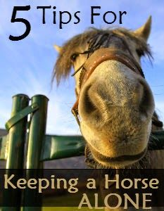 While keeping a horse alone is not ideal, many owners (including myself) have found themselves in a situation where it's the most practical and economical solution. Here's some helpful tips and strategies for keeping a solo horse happy and healthy.