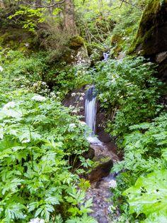 Tiny Fall by Joey Hoogendoorn Idaho, Waterfall, Places, Outdoor, Outdoors, Waterfalls, Outdoor Games, The Great Outdoors, Lugares