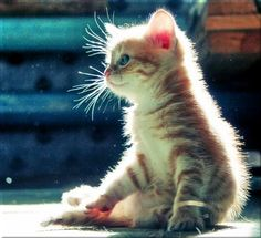 The GIANT thread of Super-Cute kittens! Only the cutest need apply...