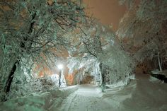 Snow covered path winter - / - - Your Local 14 day Weather FREE > www. No Ads or Apps or Hidden Costs Winter Magic, Winter Snow, Winter Christmas, Winter Night, Snow Night, Winter Road, Christmas Pics, Cold Night, Winter White