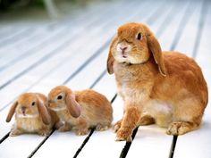 coelha e filhotinhos