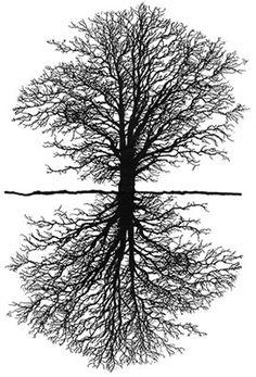 Google Image Result for http://www.biodiversityonline.ca/schoolgrounds/images/sitedesign/tree_mirror.jpg
