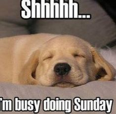18 Best Sunday Quotes Funny Images Thoughts Inspiring Quotes