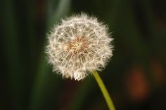 a weed. by kbuck092207, via Flickr
