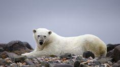 Bear rest by Ivan Starastin on 500px