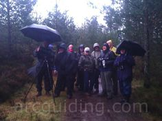 Having found what seemed like the only Scottish Crossbill in the whole of Speyside! In the rain...