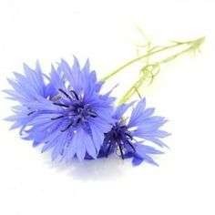 Bleuet #blue #flower #nature #cosmetic