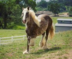 LIVER AND WHITE HORSE - Google Search