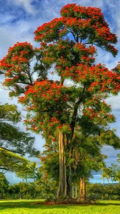 Beautiful Flowers Garden, Amazing Flowers, Pretty Flowers, Beautiful Gardens, Beautiful Nature Pictures, Amazing Nature, Beautiful Landscapes, Holiday Destinations In India, Tree Artwork
