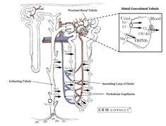 How Blood Travels thru Vessels heart artery arteriole