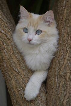 Lovely photo of a lovely cat
