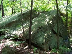forest rock - Google Search