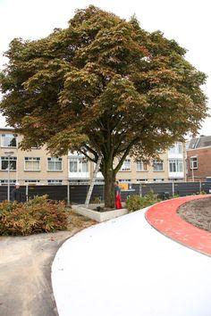 #Tkmstbeeld 9: De eerste bomen worden geplant op de playground
