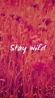 Stay Wild   Covetboard Quotes