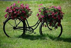 Lovely use for an old bicycle. Bicycle Decor, Bicycle Art, Petunias, Flower Basket, Flower Pots, Bike Planter, Planter Garden, Old Bikes, Yard Art