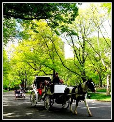 Central Park Carriage Ride, New York City by moonjazz, via Flickr