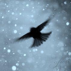 Snowflake Flight