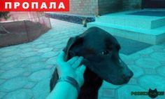 Пропала собака кобель темно-коричневый лабрадор г.Таганрог http://poiskzoo.ru/board/read26117.html  POISKZOO.RU/26117 Потерялся лабрадор темно-коричневого цвета, без ошейника, Возраст .. лет. Отзывается на имя Патрик.   РЕПОСТ! @POISKZOO2 #POISKZOO.RU #Пропала #собака #Пропала_собака #ПропалаСобака #Таганрог
