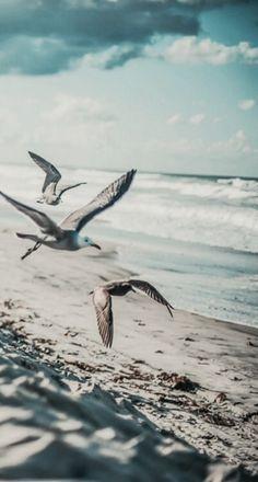 Ben bir martıyım yalnız küçük.. Sen dalga dalga denizimsin..