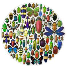 The work of Christopher Marley. Each insect or object is laid out symmetrically and become studies in both color and scale.