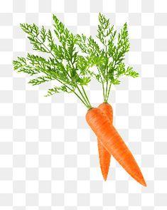 fig carrot,vegetables,fruit,fig,carrot,carrot clipart Carrot Vegetable, Photoshop Design, Summer Fruit, Clipart Images, Fruits And Vegetables, Fresh Fruit, Beautiful Flowers, Vectors, Carrots