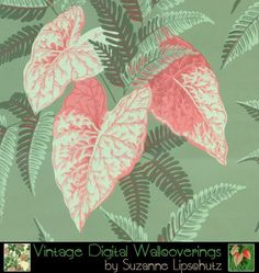 Suzanne Lipschutz Vintage Digital Reproduction Wallpaper [DIG-62106] : Designer Wallcoverings™