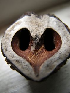 Pig snout worn flat from foraging. The nose is most up front example of Heartrock solid infinite love in the universe. God's Heart, I Love Heart, With All My Heart, Happy Heart, Love Is All, Heart In Nature, In Natura, Follow Your Heart, Seed Pods
