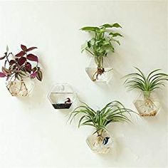 Fashionstorm 2 Packs Home Decor Wall Accessories Geometric Hexagonal Glass Vase Wall Sticked Planters Flower Pots/Water Planter Vase Hanging Glass Planters, Hanging Air Plants, Flower Planters, Flower Vases, Flower Pots, Wall Planters, Wall Vases, Hanging Table, Hanging Shelves
